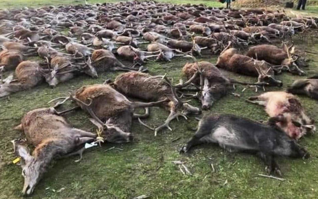 caçadors